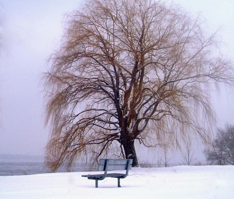L'unique banc sur blanc de l'âme à l'écoute du ramage de l'arbre solitaire.