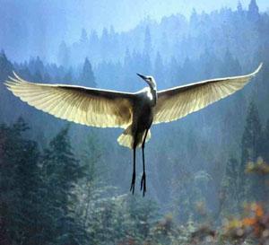 Lacher-prise - Oiseau blanc - www.eternelpresent.ch